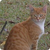 Adopt A Pet :: Pumpkin - Conyers, GA