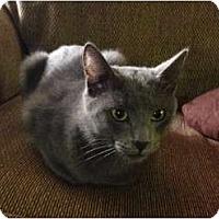 Adopt A Pet :: Prince Charming - Hurst, TX