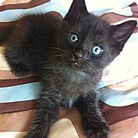 Adopt A Pet :: Trey - Xenia, OH