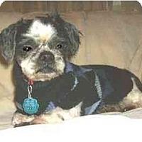 Adopt A Pet :: Sheldon - Mooy, AL