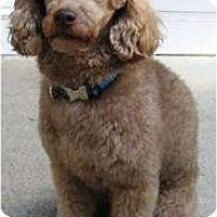 Adopt A Pet :: Coco - Dover, MA