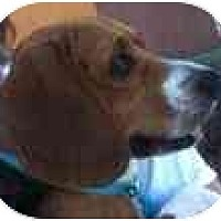 Adopt A Pet :: Hugh - Phoenix, AZ