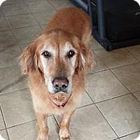 Adopt A Pet :: Murphy - Yorktown, VA