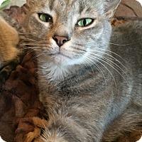 Adopt A Pet :: Simon - Waxhaw, NC