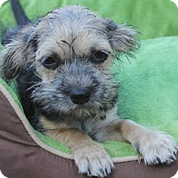 Adopt A Pet :: Cinders - Adoption pending! - Norwalk, CT