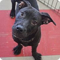 Adopt A Pet :: Starling - Shelter Island, NY