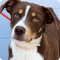 Adopt A Pet :: MEGAN (video) - Los Angeles, CA