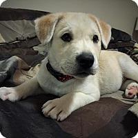 Adopt A Pet :: Bob - Saskatoon, SK