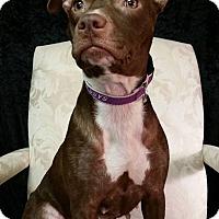 Adopt A Pet :: Noel Montgomery - Urbana, OH
