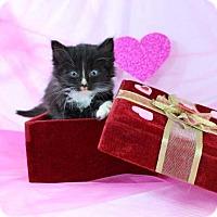 Adopt A Pet :: Hobbs - Harrisonburg, VA