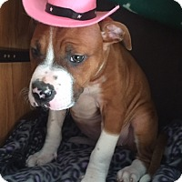 Adopt A Pet :: Pearl - Long Beach, NY