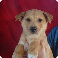 Adopt A Pet :: Brave - Oviedo, FL