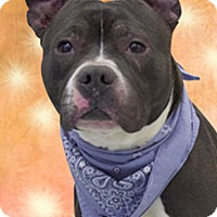 Adopt A Pet :: Denali - Cincinnati, OH