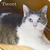 Adopt A Pet :: Tweet - West Des Moines, IA