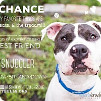 American Bulldog Mix Dog for adoption in Medford, New Jersey - Chance
