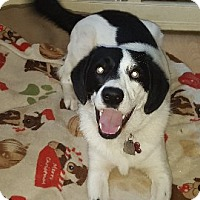 Adopt A Pet :: Mable - Aurora, IL