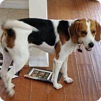 Adopt A Pet :: Tripp - Tampa, FL