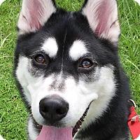 Adopt A Pet :: Keto - Orlando, FL
