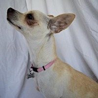 Terrier (Unknown Type, Medium) Mix Dog for adoption in Chico, California - Mariah