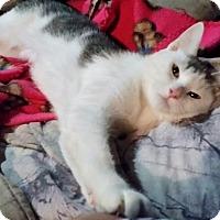 Adopt A Pet :: Candy - Lancaster, PA