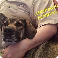 Adopt A Pet :: COCO - Winnipeg, MB