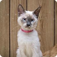 Adopt A Pet :: Kitten 14148 - Parlier, CA