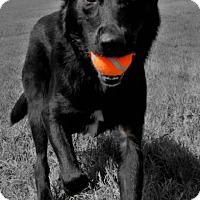 Adopt A Pet :: Brannaugh - Harmony, Glocester, RI