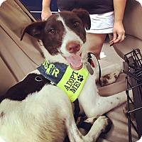 Adopt A Pet :: Madison Kocian - Jersey City, NJ