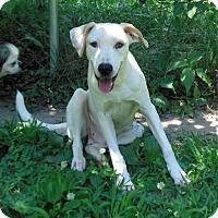 Adopt A Pet :: Sawyer - Newnan, GA
