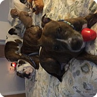 Adopt A Pet :: Charlotte - Ridgefield, CT