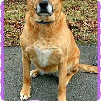 Adopt A Pet :: Baby II - Marion, KY