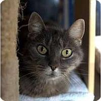 Adopt A Pet :: Desiree - New Port Richey, FL
