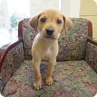 Adopt A Pet :: Aidan - Crawfordville, FL