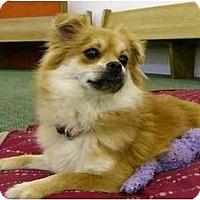 Adopt A Pet :: Muffin - Video! - Mocksville, NC