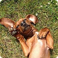 Adopt A Pet :: JUNIOR - Portland, OR