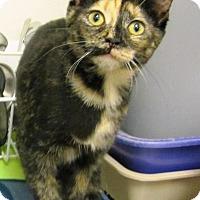 Adopt A Pet :: Emma - Albany, NY