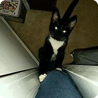 Adopt A Pet :: Betty Boop - McDonough, GA
