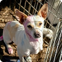 Adopt A Pet :: Skittles - Temecula, CA