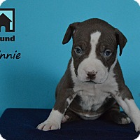 Adopt A Pet :: Minnie - Chicago, IL