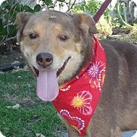 Adopt A Pet :: Jason - Canoga Park, CA