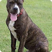 Adopt A Pet :: Wyatt - Broken Arrow, OK
