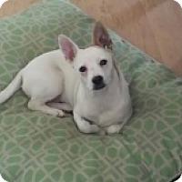 Adopt A Pet :: Taggle - Mesa, AZ