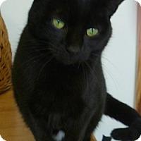 Adopt A Pet :: Azalea Ann - Hamburg, NY