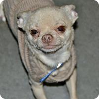 Adopt A Pet :: Shapiro - Meridian, ID