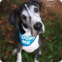 Adopt A Pet :: Augie - Huntersville, NC