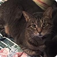 Adopt A Pet :: Princess - courtesy listing - Sparta, NJ