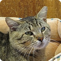 Adopt A Pet :: Riley - Unionville, PA