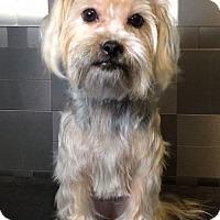 Adopt A Pet :: Kiki - McKinney, TX
