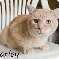 Adopt A Pet :: Barley - Waynesville, NC