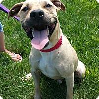 Adopt A Pet :: Buddy- URGENT - Lisbon, OH